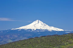 Mt. Hood Royalty Free Stock Photography