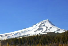 Mt. Hood. A view of the Southeast side of Mt. Hood with the forest below and cloudless blue skies above stock photos
