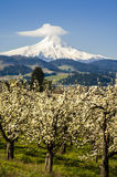 Mt Hood, apple orchards, Oregon Royalty Free Stock Photos