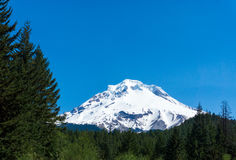Mt Hood and Forest Stock Images