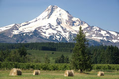 Mt. Hood with Hayfield B Stock Image