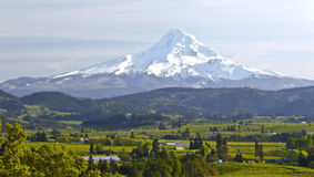 Mt. Hood and Hood River valley panorama. Mt. Hood and Hood River valley panorama in Spring Oregon stock images