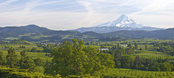 Mt. Hood and Hood River valley panorama. Royalty Free Stock Images