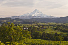 Mt. Hood and Hood River valley panorama. Mt. Hood and Hood River valley in Spring sunset light Oregon royalty free stock photo