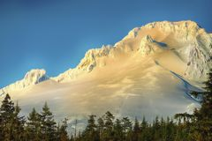 Mt. Hood in Late Afternoon Sunlight. The snow covered Mt. Hood glows with the rays of the lowering sun with the treeline forest in the foreground Stock Photo