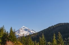 Mt Hood From Lolo Pass Mt Hood National Forest Royaltyfria Foton