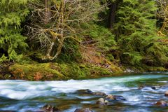 Mt Hood National Forest Salmon River Lizenzfreie Stockfotos