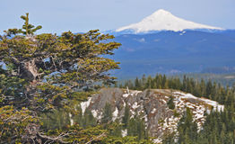 Mt. Hood From Nearby Hilltop Royalty Free Stock Images