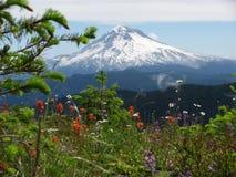 Mt Hood Oregon med vårblommor fotografering för bildbyråer