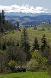 Mt Hood and Oregon Scenery. View of Mt Hood and farm country in Oregon Royalty Free Stock Photo