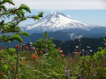 Mt Hood Oregon with spring flowers stock image