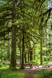 Mt Hood Picnic Spot. Picnic Spot in Mt Hood National Forest with moss covered old trees Royalty Free Stock Photo