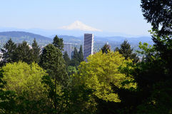 Mt Hood and Portland Skyline View from Rose Garden. This photo was taken in Portland. Portland, Oregon's largest city, sits on the Columbia and Willamette Royalty Free Stock Image