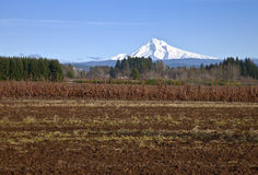 Mt Hood in snow and fields. Stock Photos