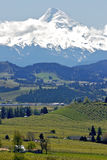 Mt Hood in Spring. View of Mt Hood and farm country in Oregon Stock Photography