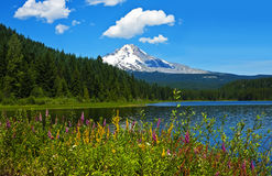 Mt. Hood with Trillium Lake and wildflowers. Mt. Hood above Trillium Lake with wildflowers, Oregon royalty free stock photo