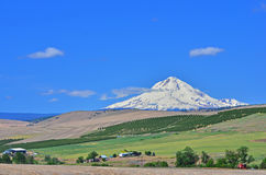 Mt Hood under a blue sky Royalty Free Stock Image