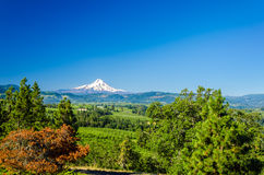 Mt. Hood and Valley Stock Photography