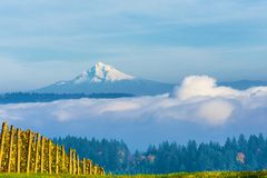 View of Mt. Hood From Dundee Hills. Mt. Hood is viewed above the fog from vineyards in Dundee Hills Wine Country Royalty Free Stock Photography