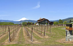 Mt Hood winery. Royalty Free Stock Photography