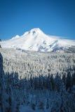Mt. Hood, winter, Oregon Royalty Free Stock Photo
