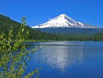 Mt. Hood With Trillium Lake Stock Photos