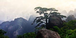 Mt Huangshan (желтая гора) с сосной, Аньхоем, Китаем Стоковое фото RF