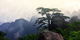 Mt. Huangshan (Yellow Mountain) with pine tree, Anhui, China Royalty Free Stock Photo