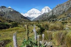 Mt Huascaran dalla traccia di Laguna 69, Perù Fotografia Stock Libera da Diritti
