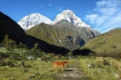 Mt Huascaran dalla traccia di Laguna 69, Perù Immagini Stock Libere da Diritti