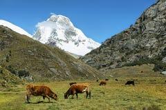 Mt Huascaran dalla traccia di Laguna 69, Perù Immagine Stock