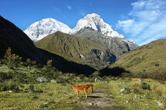Mt Huascaran de traînée de Laguna 69, Pérou Images libres de droits