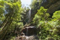 Mt Irvine in den blauen Bergen, Australien Grüner üppiger Regenwald naß und feucht an einem sonnigen Tag lizenzfreie stockfotografie