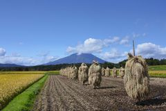 Mt.Iwate и ландшафт поля риса Стоковая Фотография RF