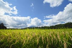 Mt.Iwate and Landscape of rice field Royalty Free Stock Photos