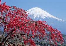 Mt japonés Fuji Foto de archivo libre de regalías