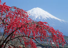 Mt japonais Fuji Photo libre de droits