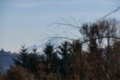 Mt Kapiszon w Oregon Zdjęcie Stock