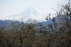 Mt kapiszon w Oregon Fotografia Royalty Free