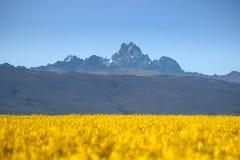 Mt Kenia stockbilder