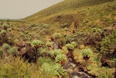 Mt Kenya terräng Fotografering för Bildbyråer