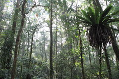 Mt.Kerinci tropical forest Stock Image