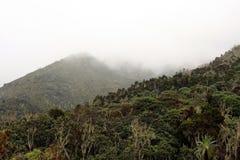 Mt Kilimanjaro,坦桑尼亚,非洲 免版税库存图片