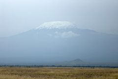 Mt. Kilimanjaro, Africa. Mt. Kilimanjaro, the highest mountain of Africa. Herd of African elephants Stock Image