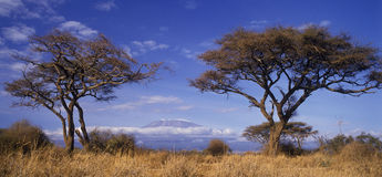 Mt Kilimanjaro. Africa's Mt Kilimanjaro in Kenya Stock Photo