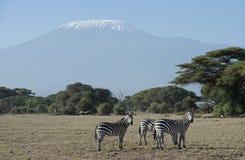 Mt Kilimanjaro. Kenya Africa Amboseli reserve  Mt Kilimanjaro Stock Photo