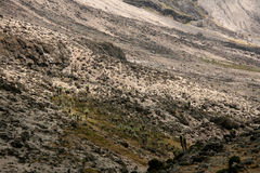 Mt Kilimanjaro, Tanzania, Africa. Rugged Landscape at Mt Kilimanjaro in Tanzania, Africa Royalty Free Stock Photo