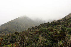 Mt Kilimanjaro, Tanzania, Afryka Obrazy Royalty Free