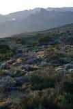 Mt Kilimanjaro, Tanzania, Afryka Zdjęcia Stock