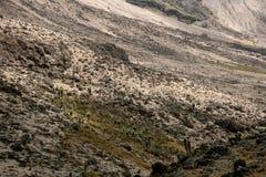 Mt Kilimanjaro, Tanzania, Afryka Zdjęcie Royalty Free